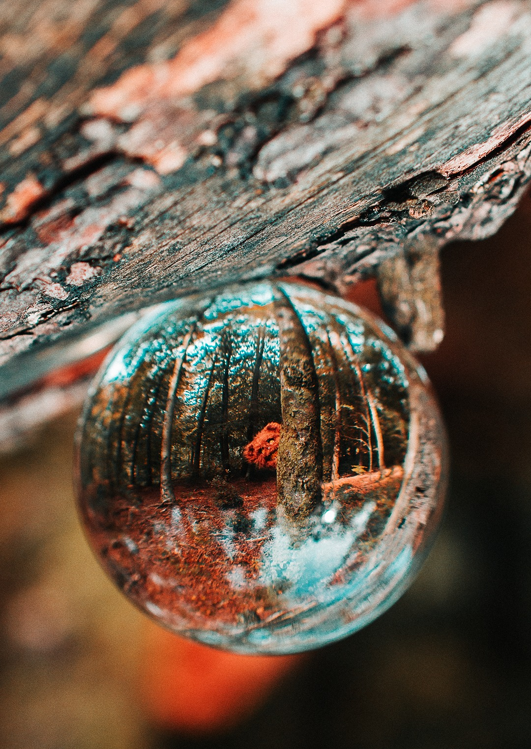 spooky photography lensball forest